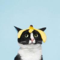 头顶香蕉皮的猫