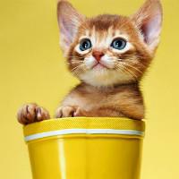 猫儿爬兜兜