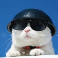 芥末酱猫猫