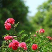 蔷薇文化创意空间