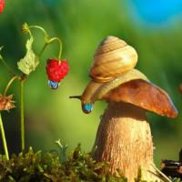 崖下的蜗牛