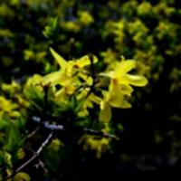 藍草团子lampoon