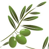 小橄榄设计