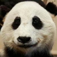 熊猫创意文案