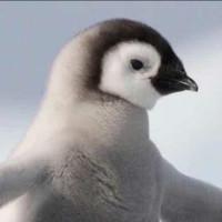 企鹅文策工作室