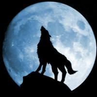 黑狼夜风工作室
