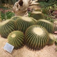 青岛蜂鸟空间设计