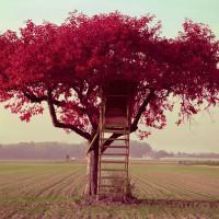 一棵开花的树521