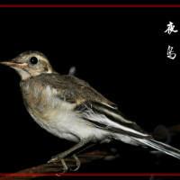 夜鸟音乐工作室