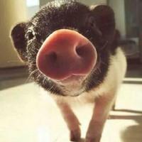 猪猪不是胖妹