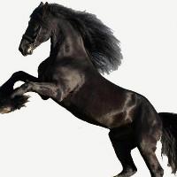 黑马营销策划机构