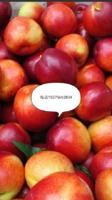 梨苹果油桃基地