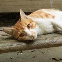 铃子的猫儿