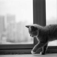 一只叫旺财的猫