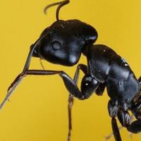 黑蚂蚁传媒工作室
